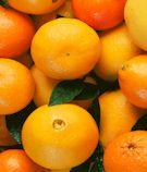 citrus_sm